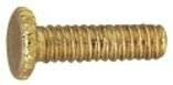 12 Fitter Screws in Polished Brass (Set of 33) by Westinghouse Lighting