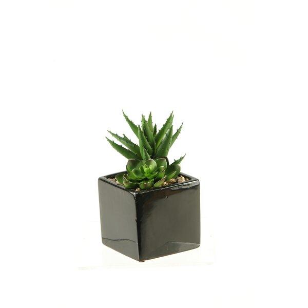 Echeveria and Aloe Desk Top Plant in Planter by D & W Silks