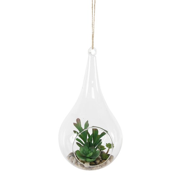 Hanging Succulent Plant in Teardrop Terrarium by B