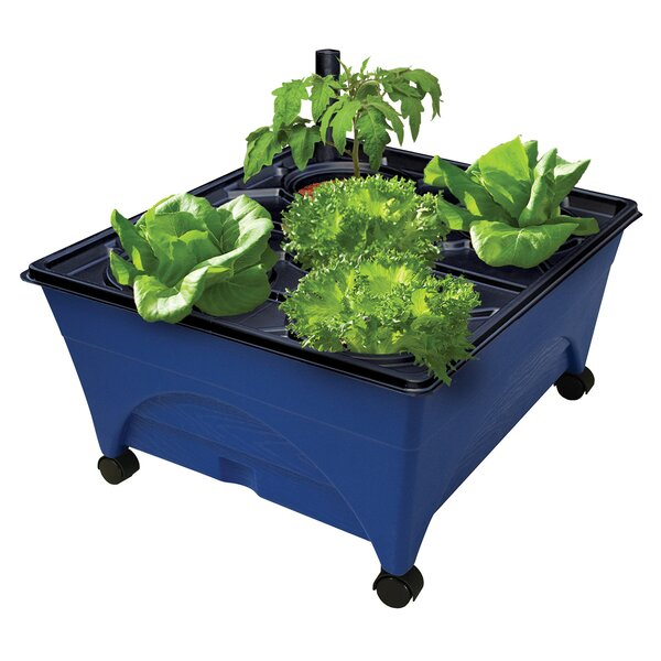 Grow Box Hydroponic Unit by EMSCO Group