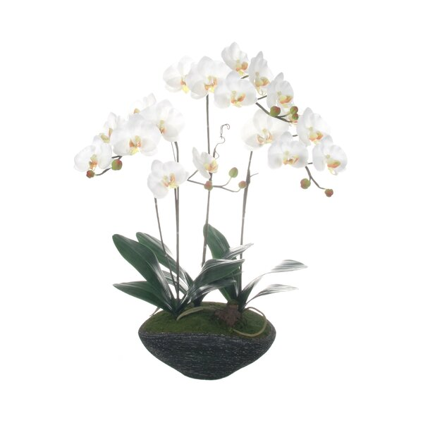 Phalaenopsis Orchids Floral Arrangement in Rock Base by Red Vanilla
