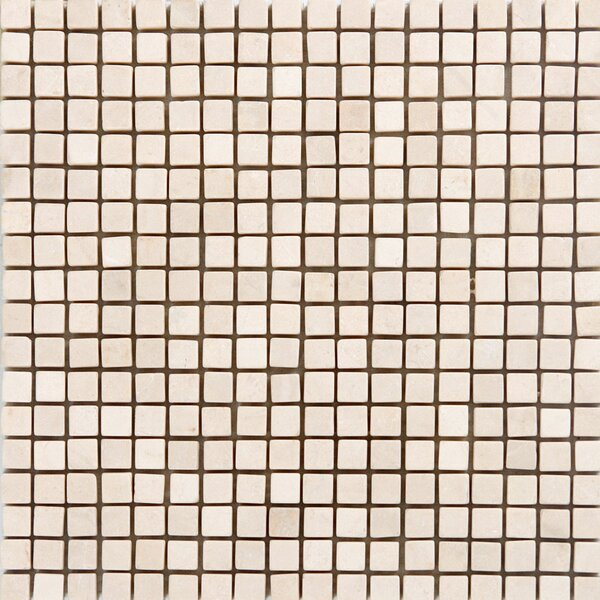 0.63 x 0.63 Marble Mosaic Tile in Polished Crema marfil by Epoch Architectural Surfaces