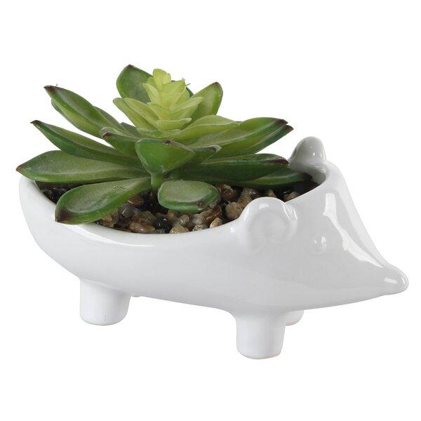 2 Piece Ceramic Hedgehog Desktop Succulent Plant Set by Wrought Studio