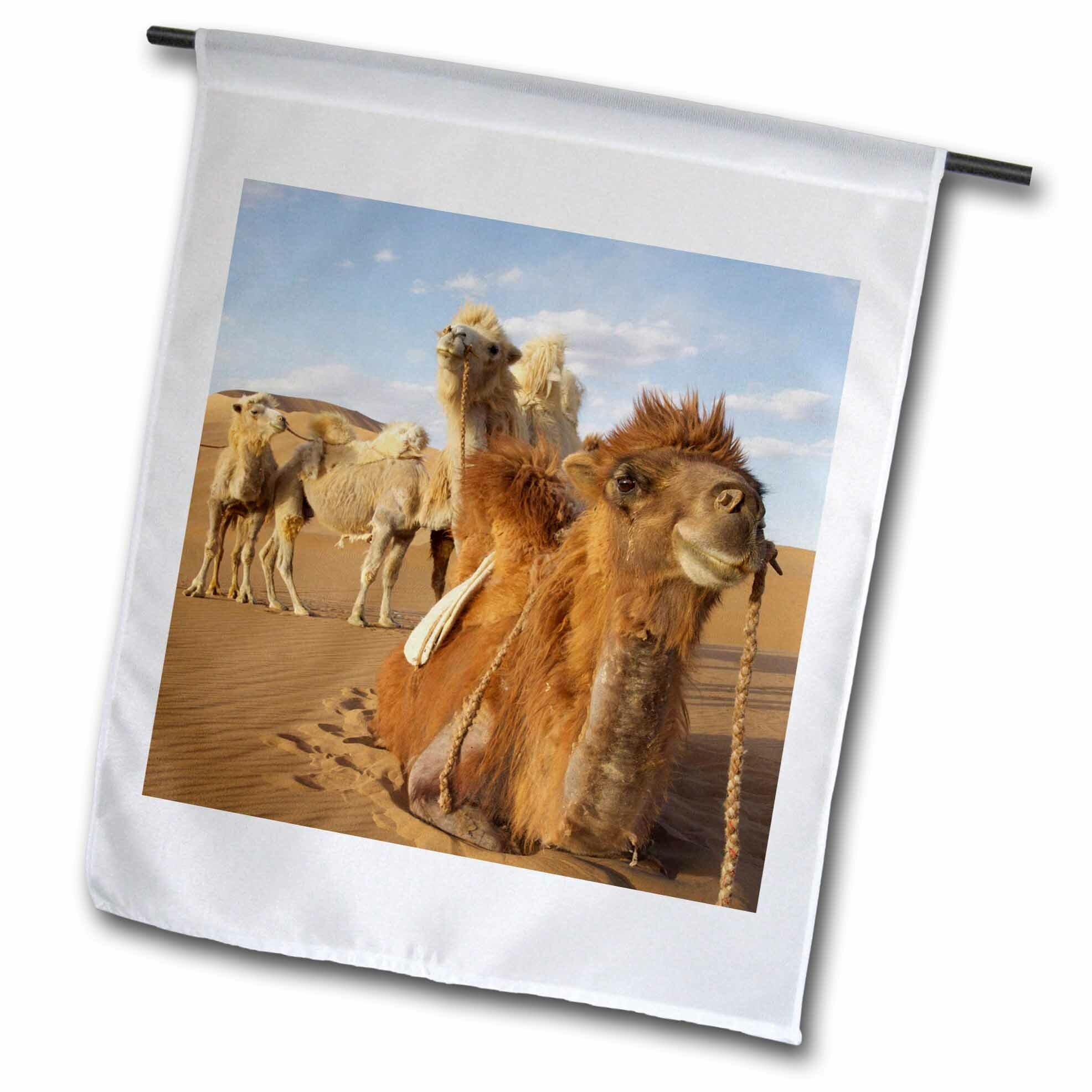 3dRose China, Inner Mongolia, Badain Jaran Desert, Caravan Camels in ...