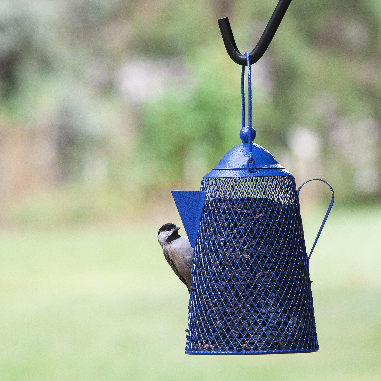 feeder blue tit on videoblocks rluyumhu garden footage bird close stock fledgling video baby feeders up