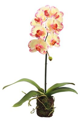 Phalaenopsis Drop Orchid Floral Arrangement in Plant (Set of 2) by House of Hampton