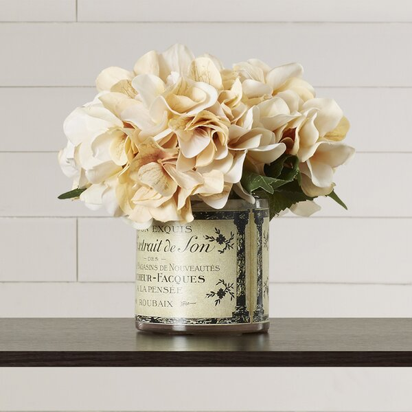 Adelaide Hydrangea in French Labeled Pot by Lark M