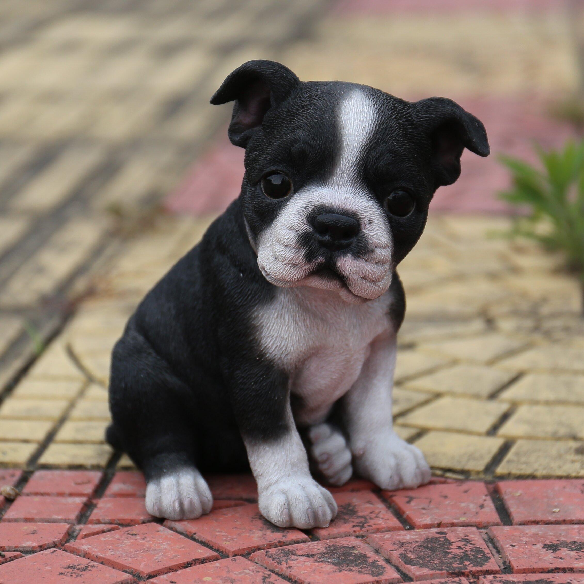 Hi Line Gift Ltd Sitting Boston Terrier Puppy Statue
