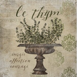 'French Herbs Thyme' by Beth Albert Graphic Art on Canvas by Buy Art For Less