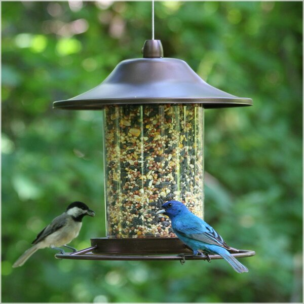 Panorama Tube Bird Feeder by Perky Pet