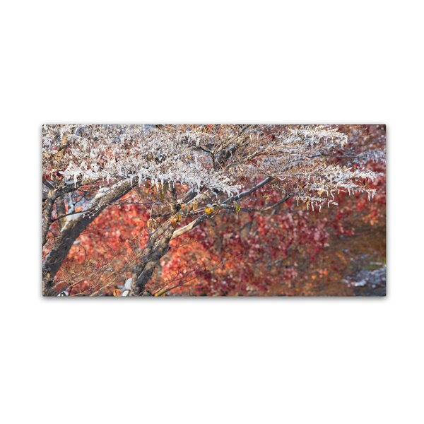 Struggle Between Autumn and Winter by Kurt Shaffer Photographic Print on Wrapped Canvas by Trademark Fine Art