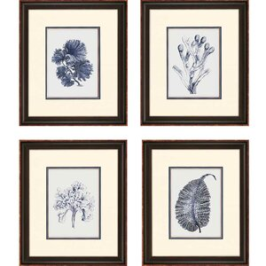 Indigo Kelp by Anonymous 4 Piece Framed Graphic Art Set (Set of 4) by Paragon
