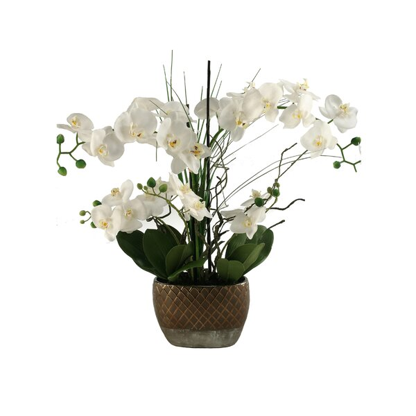White Orchids in Oval Ceramic Planter by D & W Silks