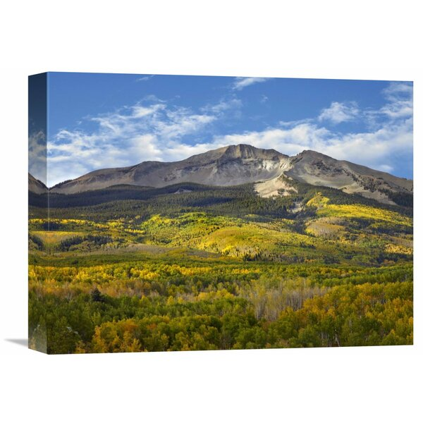 Nature Photographs Aspen Forest and East Beckwith Mountain, West Elk Wilderness Colorado by Tim Fitzharris Photographic Print on Wrapped Canvas by Global Gallery