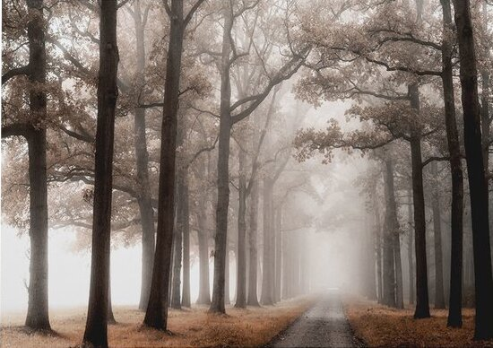 Misty Road Photographic Print On Wrapped Canvas By Charlton Home.