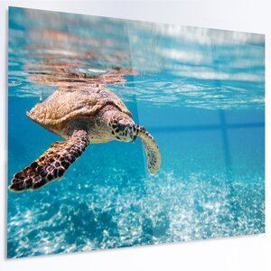 'Large Hawksbill Sea Turtle' Photographic Print on Metal by Design Art
