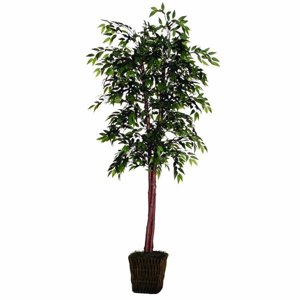 Floor Ficus Tree in Basket by The Holiday Aisle