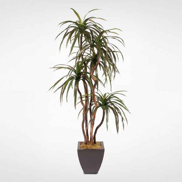 Silk Floor Yucca Tree in Planter by Brayden Studio