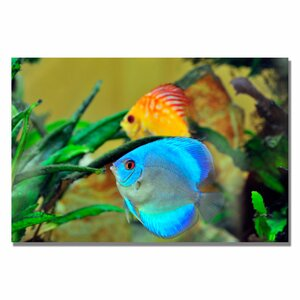 'Two Tropical Fish II' by Kurt Shaffer Photographic Print on Canvas by Trademark Fine Art