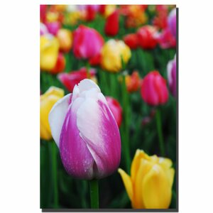 In Amont the Tulips by Kurt Shaffer Photographic Print on Canvas by Trademark Fine Art