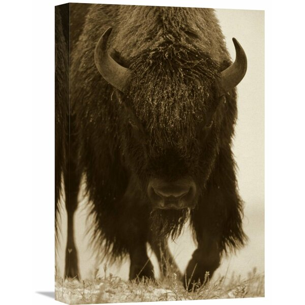Nature Photographs American Bison Portrait by Global Gallery