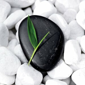 'Zen Stone' Photographic Print on Canvas by East Urban Home