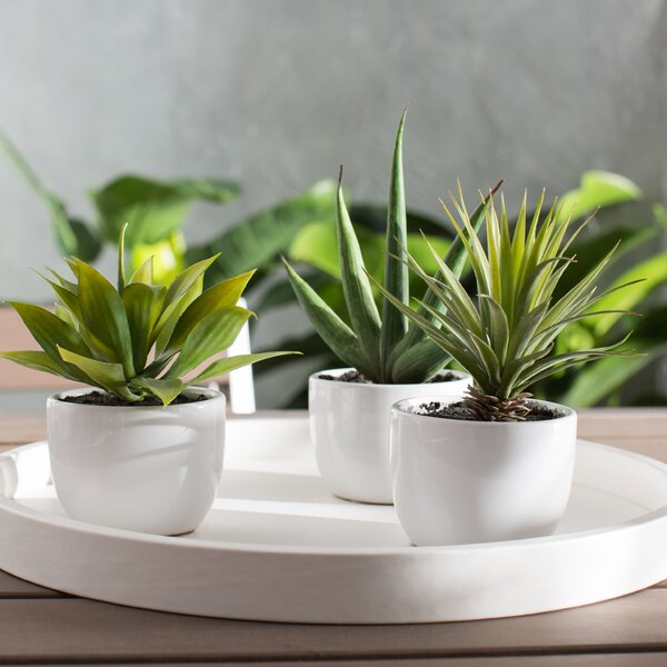 Aldorough 3 Piece Faux Southwest Succulent Set by Langley Street