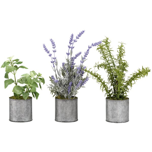 Basil, Lavender and Springeri in Tin Floor Foliage Plant in Planter Set (Set of 3) by Gracie Oaks