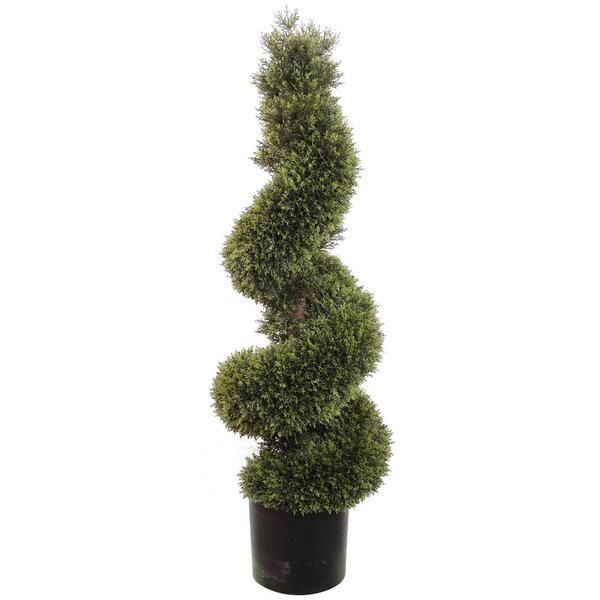 Spiral Cedar Topiary in Pot by Larksilk