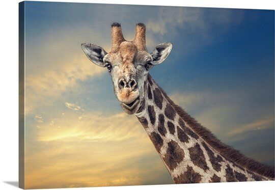 The Friendly Giant by Piet Flour Photographic Print on Canvas by Canvas On Demand