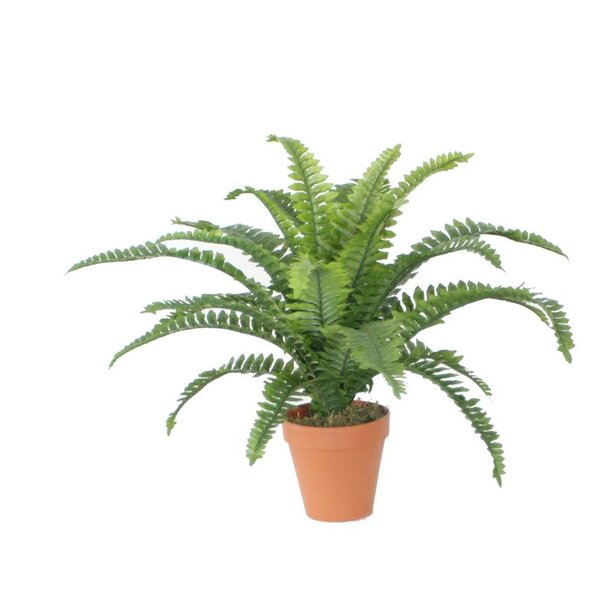 Artificial Boston Fern Spring Decoration Desk Top Plant in Pot by Northlight Seasonal
