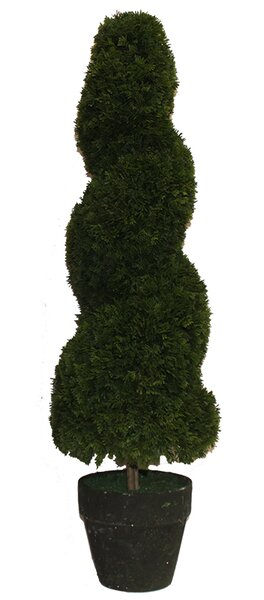 Spiral Floor Boxwood Topiary in Pot by Darby Home Co