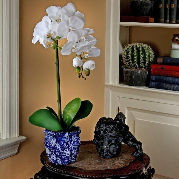 Phaleanopsis Desktop Floral Arrangement in Pot by Bloomsbury Market