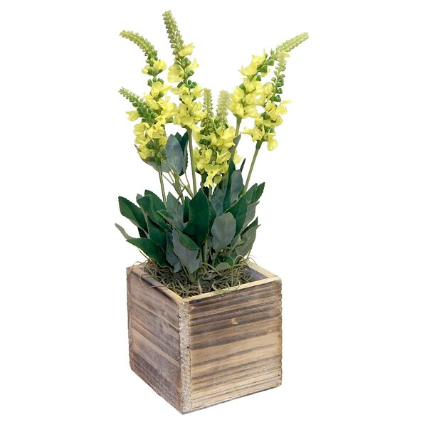 Grape Hyacinth in Wooden Pot by Laurel Foundry Modern Farmhouse