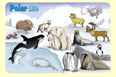 Polar Life Placemat (Set of 4) by Painless Learning Placemats