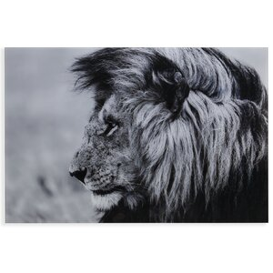 'The Lion' Photographic Print by Latitude Run