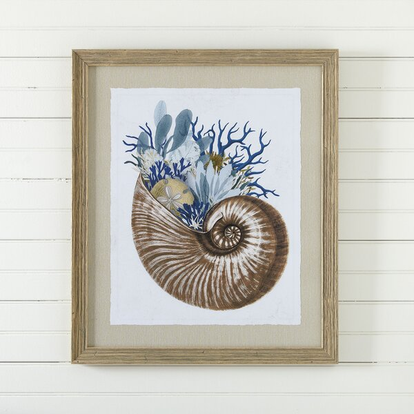 Mollusk Framed Print I by Birch Lane™
