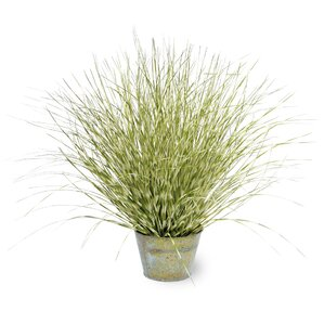 Faux Zebra Grass