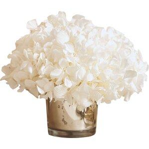 Preserved White Hydrangea