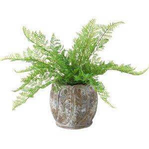 Faux Lace Fern in Decorative Stone Planter