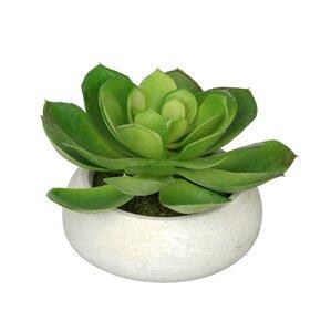 Haight Artificial Echeveria Plant in Planter
