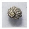 Artist Lane Striped Moon Shell by Emma Relph Photographic Print Wrapped on Canvas