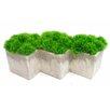 Grass Desk Top Plant  in Planter
