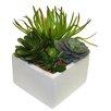 Succulent Desk Top Plant in Planter