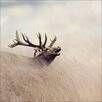 Pro-Art Lonely Deer Photographic Print on Canvas
