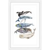 Marmont Hill 'Whale Species' by Rachel Byler Framed Painting Print