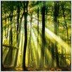 Eurographics Gerahmtes Wandbild mit LED Sunbeam Forest