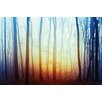 Hazelwood Home 'Frosty Forest' Photographic Print on Glass