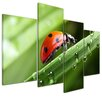 Bilderdepot24 Ladybug 4-Piece Photographic Print on Canvas Set