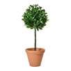 Castleton Home Bay Ball Topiary in Planter